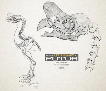 paléo-artiste; paléontologie; marc boulay; sébastien steyer; biologie spéculative; éditions belin; futurs; sciences; demain les animaux du futur